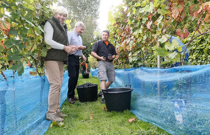 Foto: W&F: Guy Somers, eigenaar van Vigna en CEO van industriebouw Frisomat in Wijnegem, krijgt de medaille volgende maand uitgereikt tijdens wijnbeurs Megavino in Brussel
